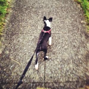 Walking Winston